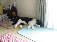 Nozawa2010__404