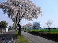 Sakura2011_006