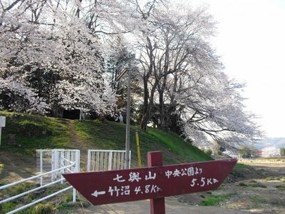 Sakura2011_024