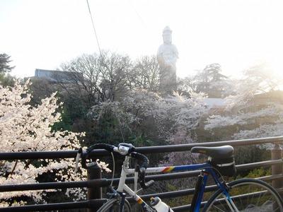Sakura2011_094