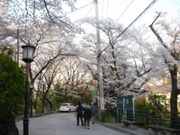 Sakura2011_110