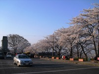 Sakura2011_124