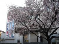 Sakura2011_163