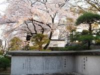 Sakura2011_167