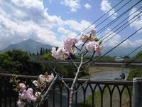 Chichibu2011_004
