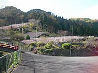 Chichibu_201111_029