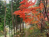 Chichibu201112_040